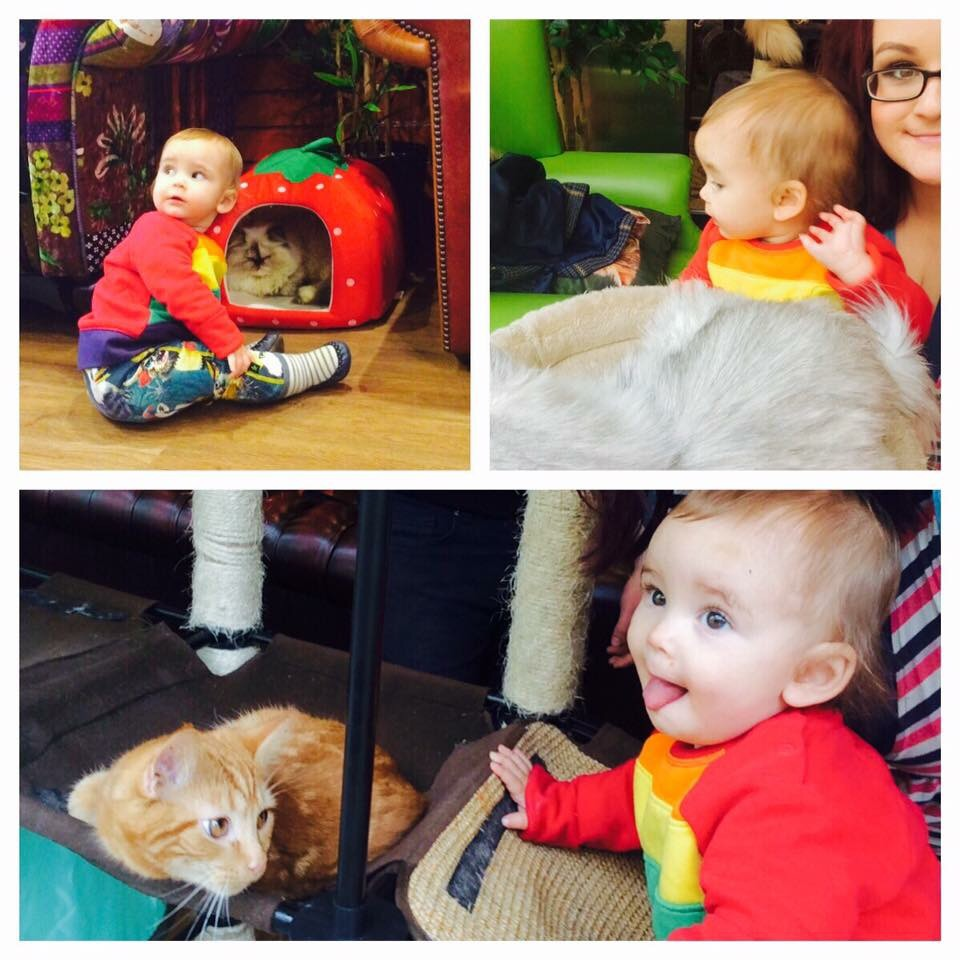 the kitty cafe in nottingham with a toddler