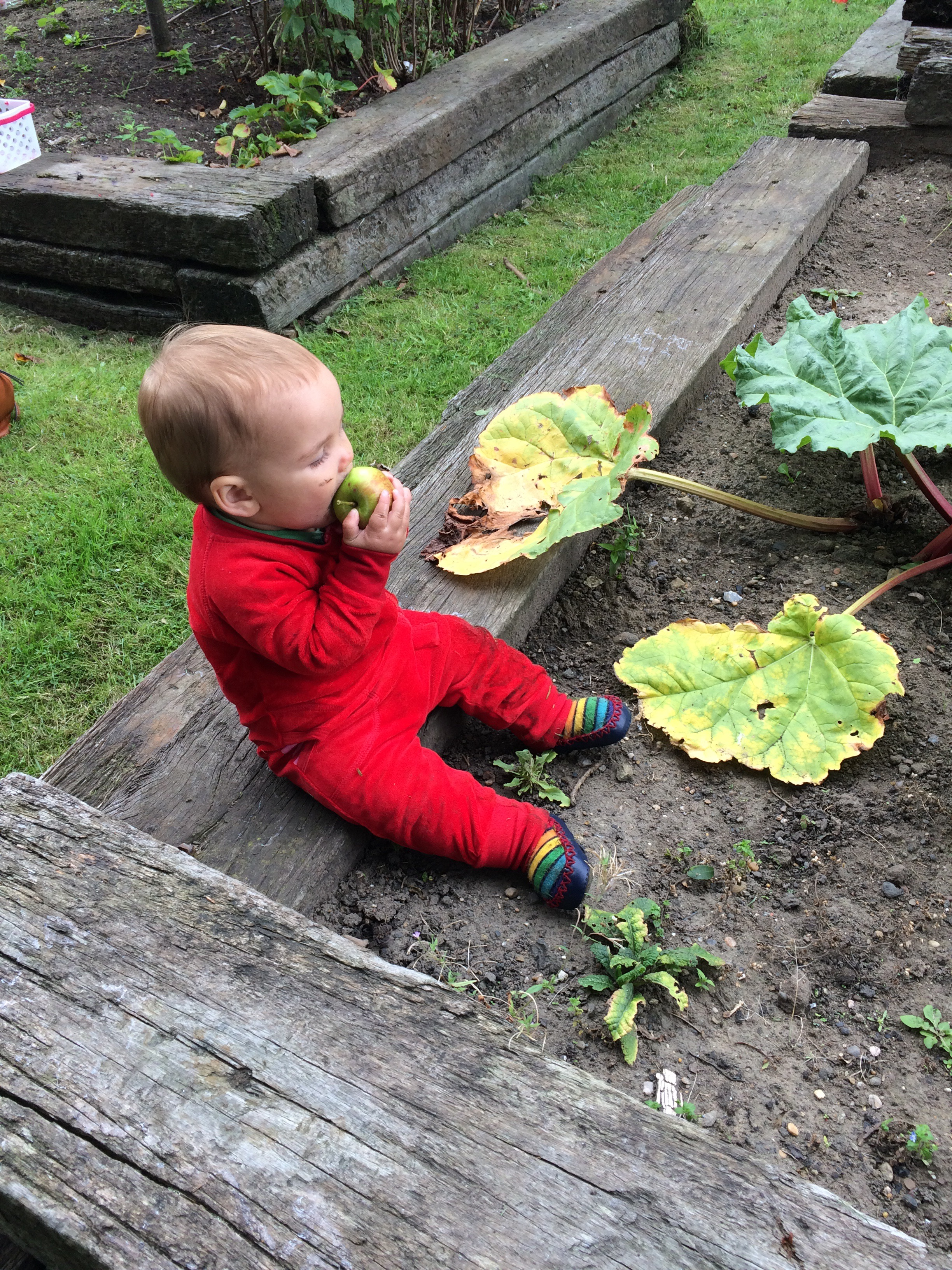 Toddler gardening eating an Apple