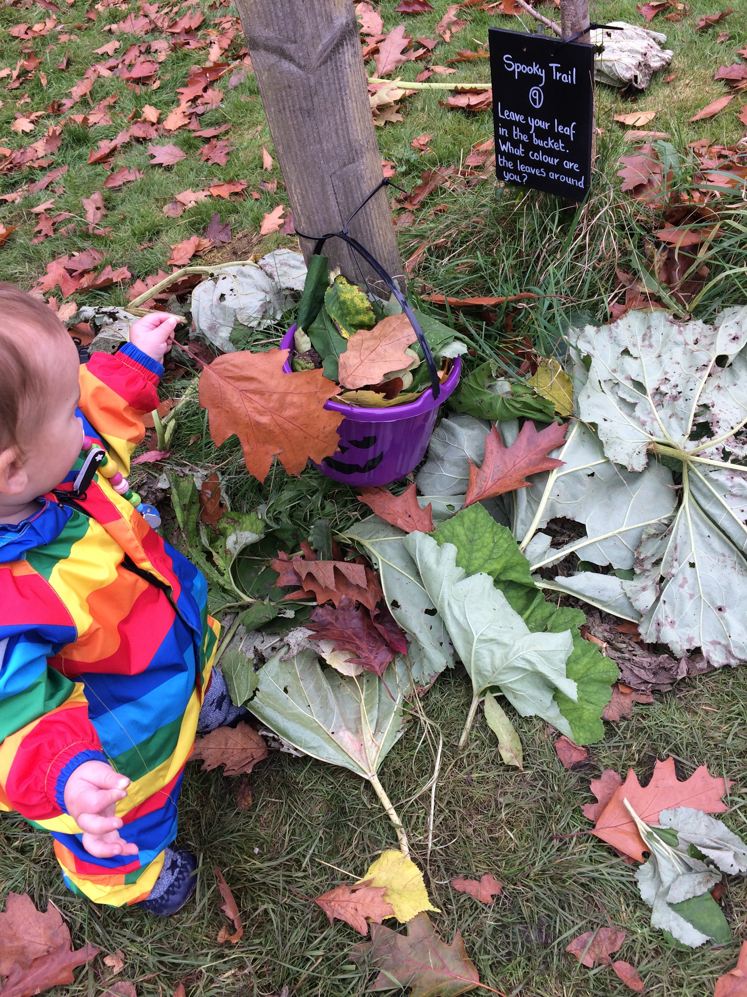 Toddler at ilam park national trust doing Halloween trail