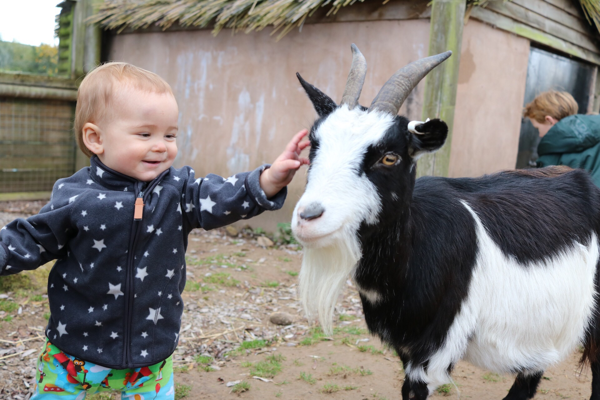 Baby touching goat at peak wildlife park