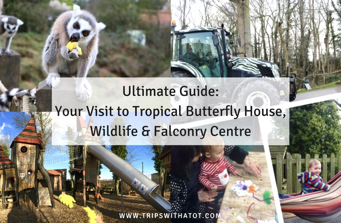 What To Do at Tropical Butterfly House, Wildlife & Falconry Centre in Sheffield