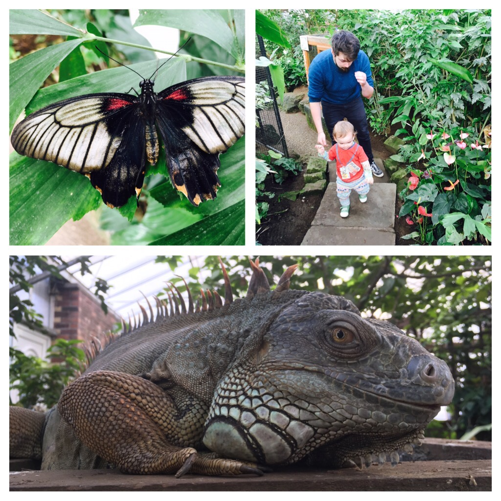 Tropical Butterfly House in Sheffield