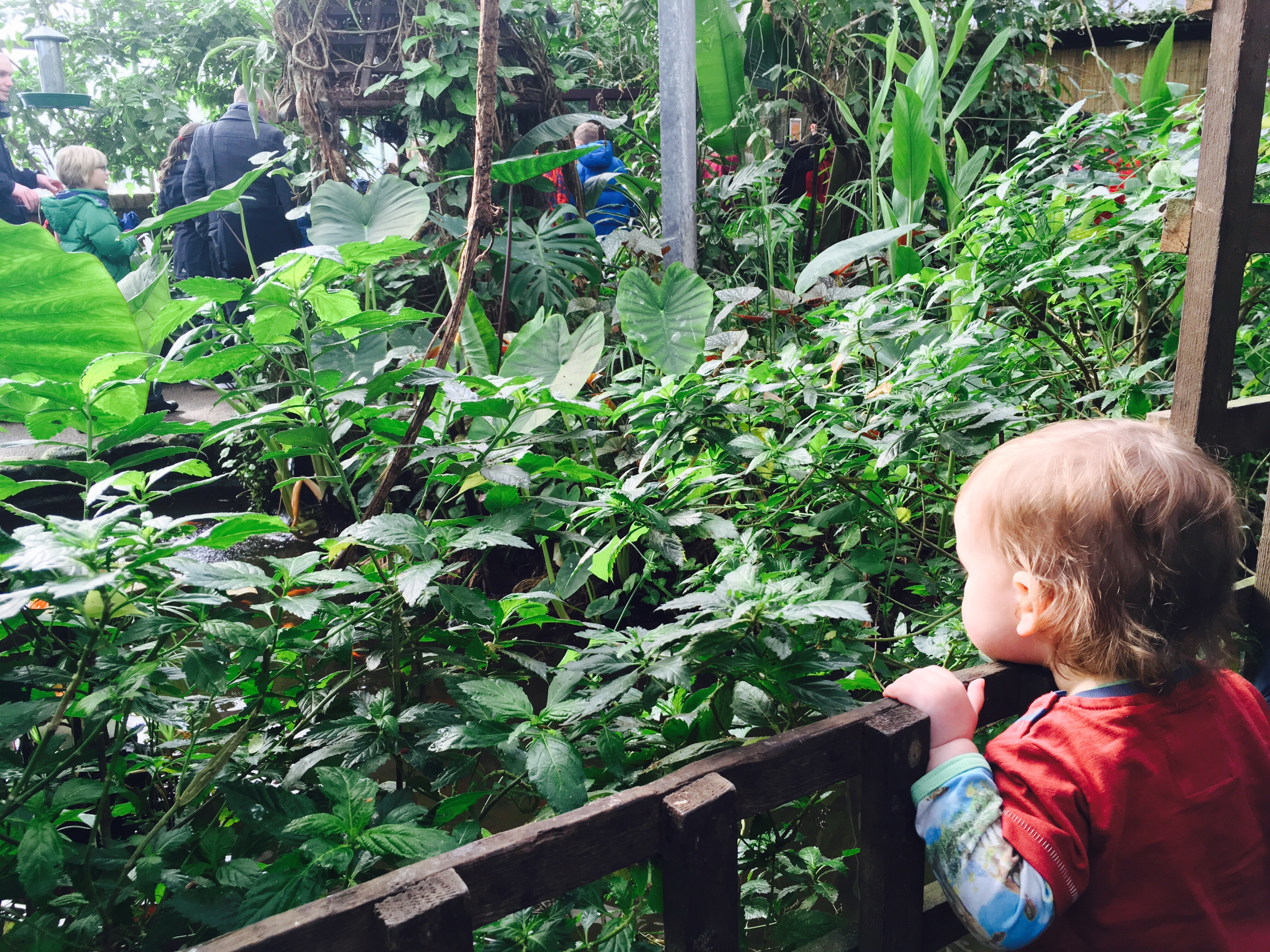 Tropical butterfly house Sheffield