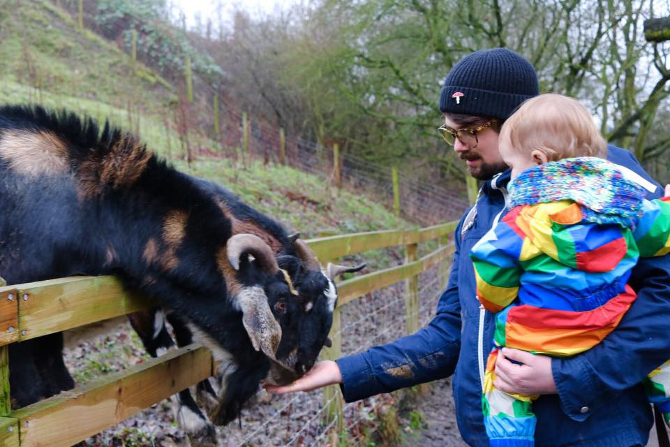 aston springs farm 15+ Best Days Out with Animals: Farms & Zoos near Sheffield