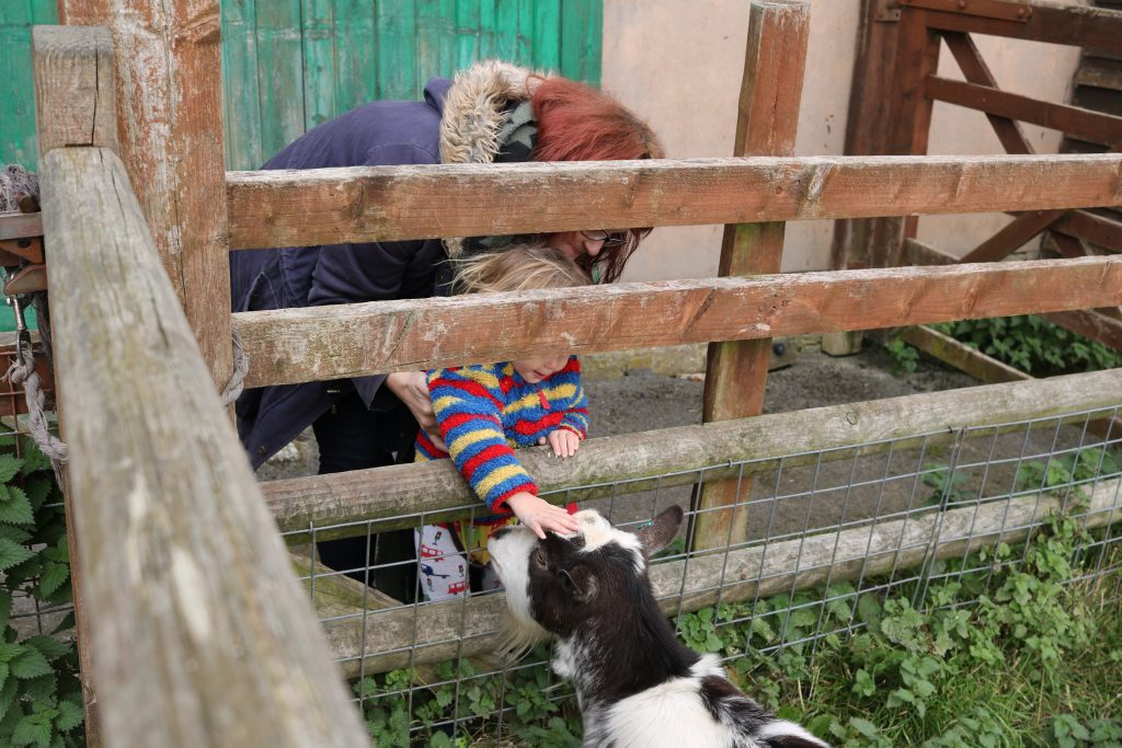 15+ Best Days Out with Animals: Farms & Zoos near Sheffield
