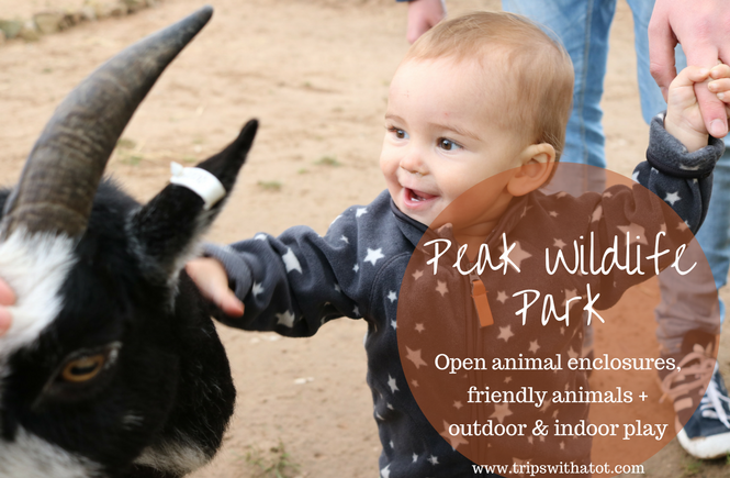 Peak Wildlife Park: 7 reasons why I recommend a trip to this zoo