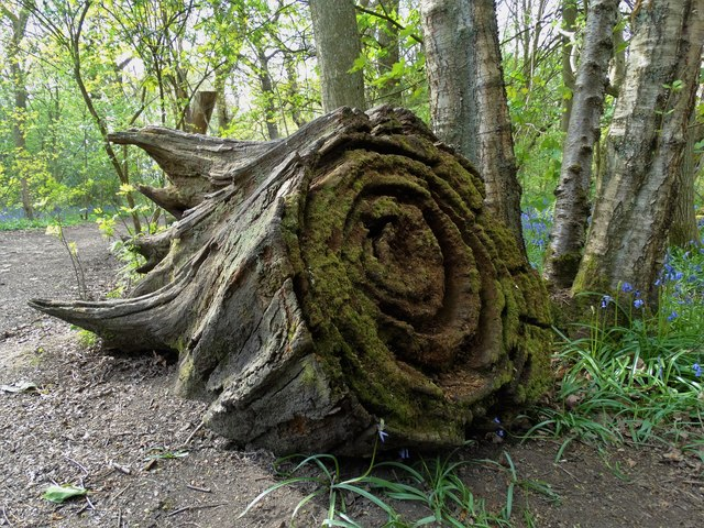 10 Magical outdoor spaces for fairytale walks in Sheffield ecclesall woods
