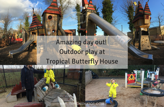 Best things to do at Tropical Butterfly House, Sheffield