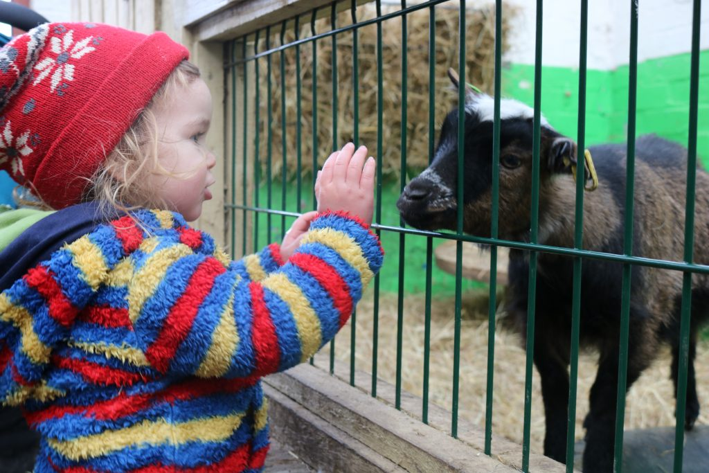 Heeley City Farm 23 Wonderful Things To Do with Kids For Spring and Easter in Sheffield What's On In Sheffield This Weekend For Kids - June 16/17 & Fathers Day