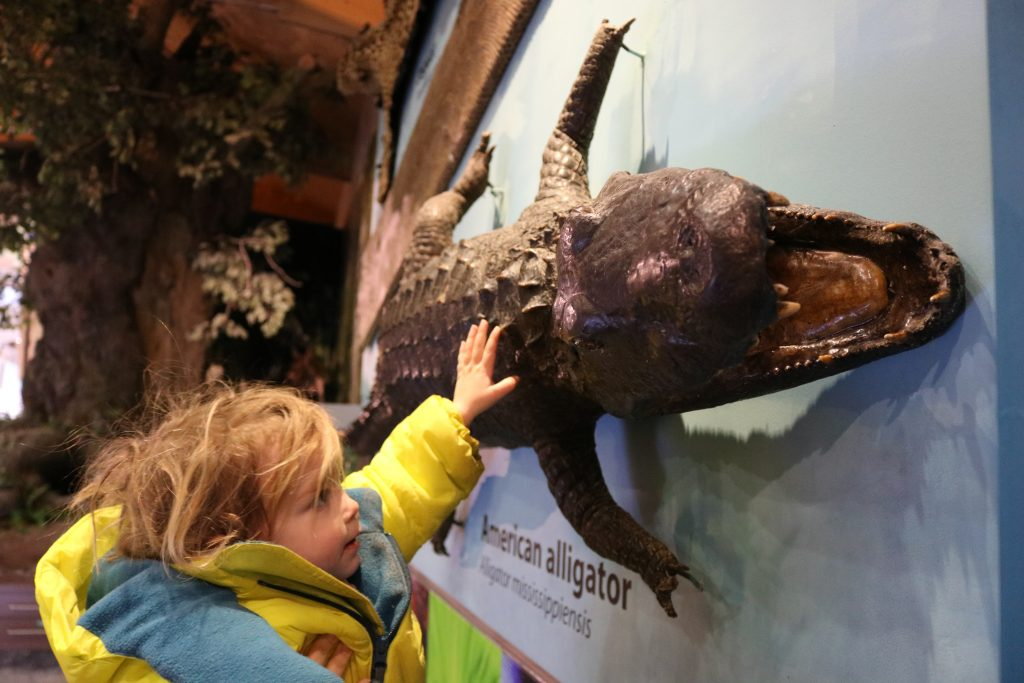 All About Weston Park Museum, Sheffield For Kids