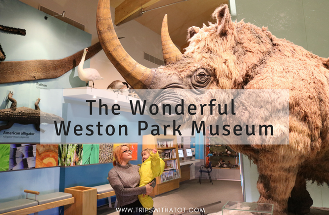 All About Weston Park Museum, Sheffield For Kids 40 FREE Days Out For Families in Sheffield