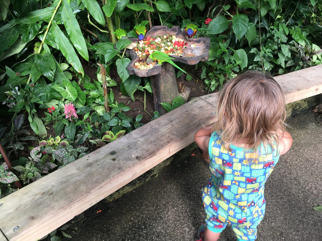 Best Family Day Out in Sheffield: Tropical Butterfly House, Wildlife and Falconry Centre, Sheffield