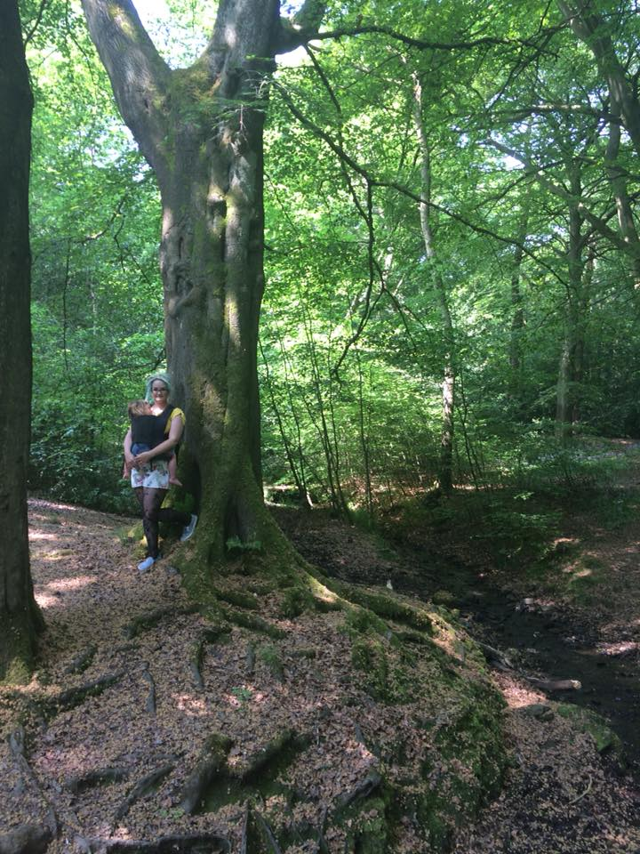 Ecclesall Woods 8 places to go in Sheffield for a lovely woodland walk this autumn