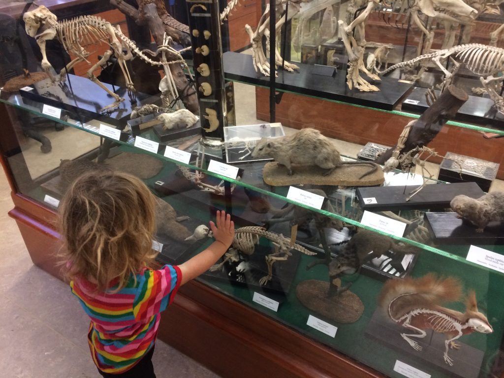 alfred denny museum Top 41 Things To Do In South Yorkshire With Kids