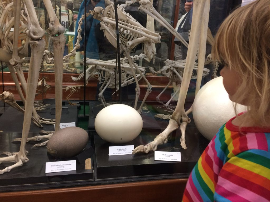 Alfred denny museum What's on this weekend in and around Sheffield for kids December 1/2