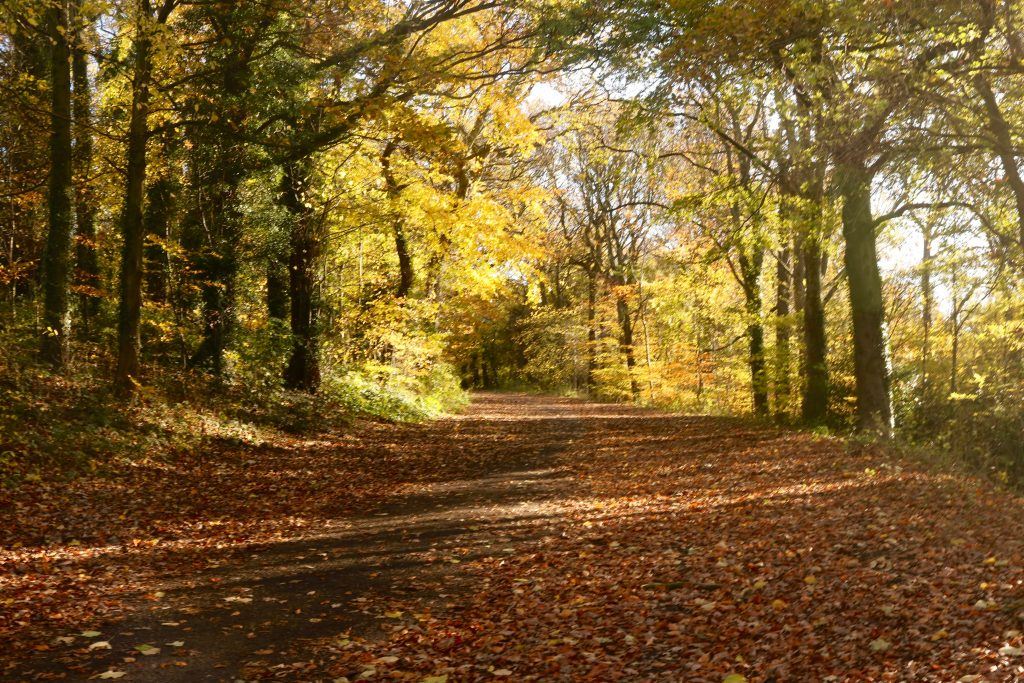 Nine Things To Do in Autumn with kids in Sheffield