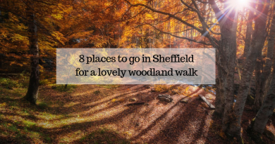 8 places to go in Sheffield for a lovely woodland walk this autumn