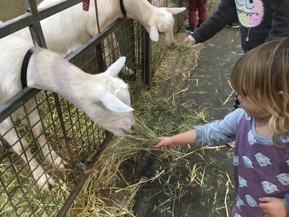 29 top best favourite days out, trips & holidays of 2018 Family favourite: Chatsworth House farmyard & Adventure playgrounds