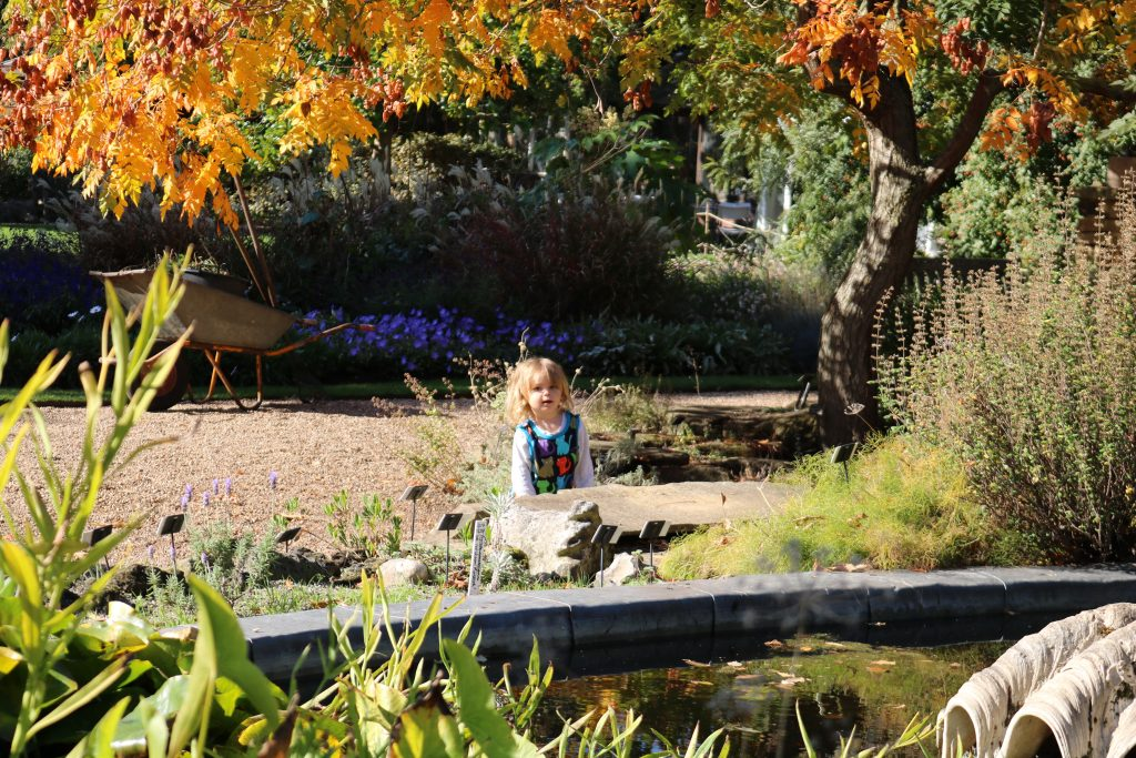 Things To Do In London with a toddler - Chelsea Psychic Gardens