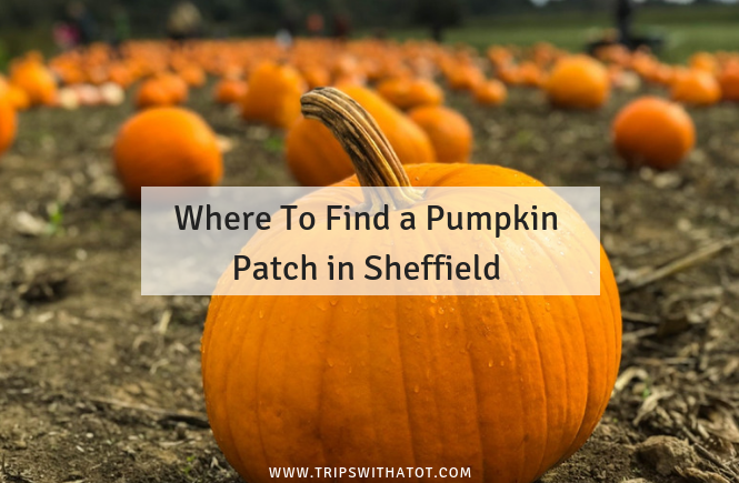 Where to find a Pumpkin Patch near Sheffield
