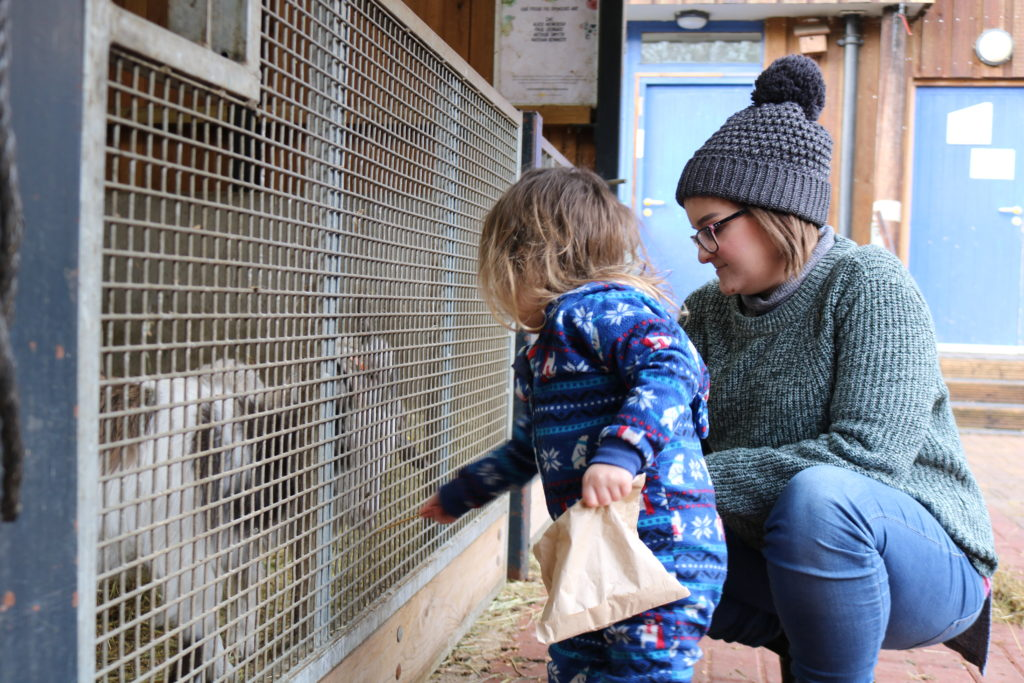 Ouseburn farm: 3 day trip in Newcastle: Things To Do With a Toddler