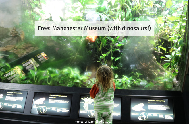Free: Manchester Museum (dinosaurs)