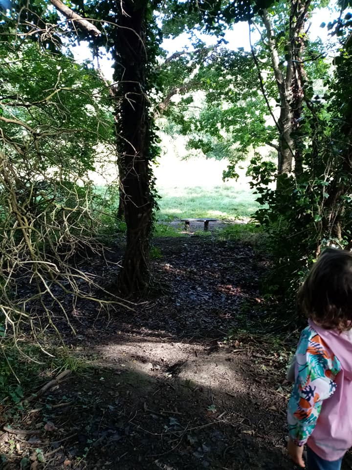 What to do at Shire Brook Valley Nature Reserve, Sheffield