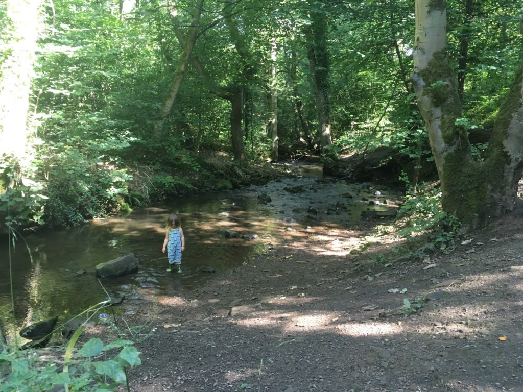 Why Forge Dam to Endcliffe Park is the best family walk in Sheffield