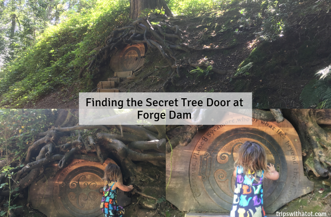 Finding the Secret Tree Door at Forge Dam