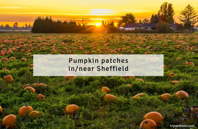 Best places to Pick a Pumpkin in/near Sheffield 2019