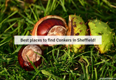 Best places to find Conkers in Sheffield!